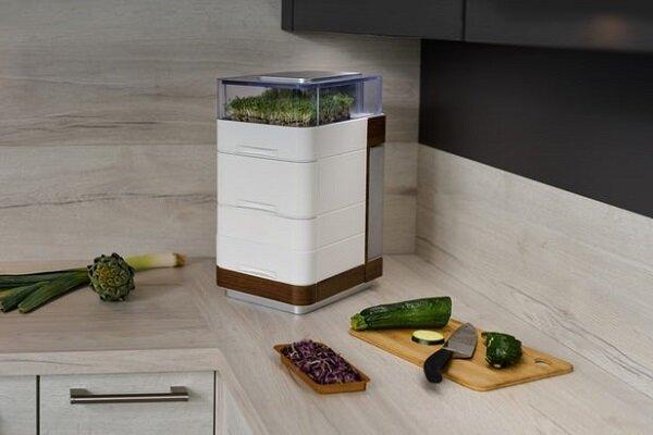 تبدیل آپارتمان به باغ و مزرعه با ابداع جوانه های ارگانیک