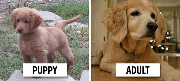 سگ های بالغی که شبیه توله شان هستند!