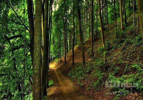 جنگل های هیرکانی ؛ زیبای 40 میلیون ساله (