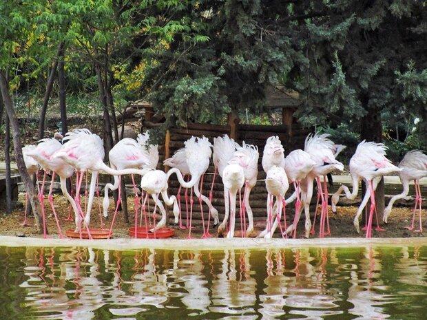 آزادسازی پرندگان در باغ پرندگان تهران