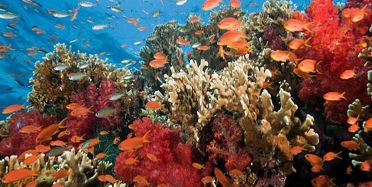 احیای صخره های مرجانی با هوش مصنوعی اینتل