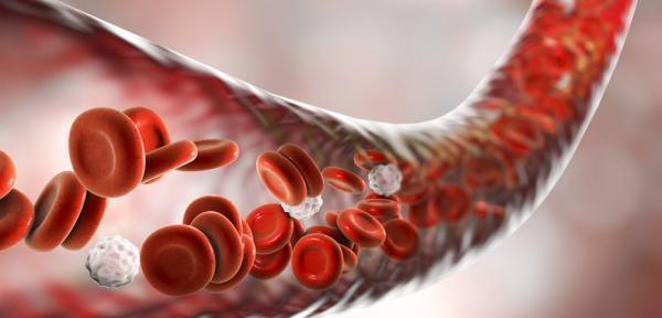 تعداد انواع یاخته های خونی چقدر است؟