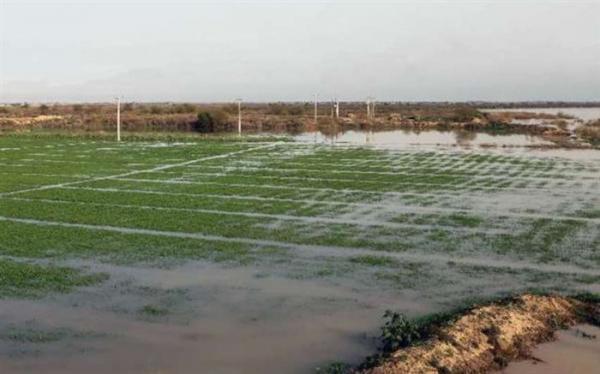 امکان بهره مندی اشترا ک های چاه آب کشاورزی از برق رایگان