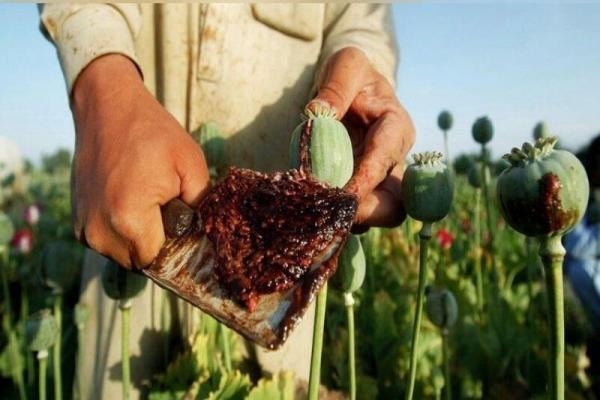 یک میلیون کودک معتاد در افغانستان
