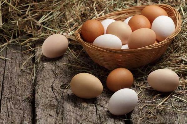 نکاتی در مورد تخم مرغ که خوب است بدانید